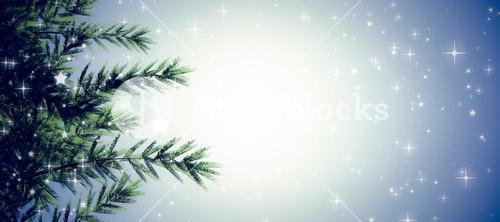 Composite image of fir tree branches