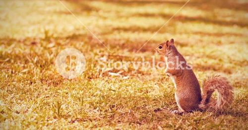 Squirrel on grass field at park