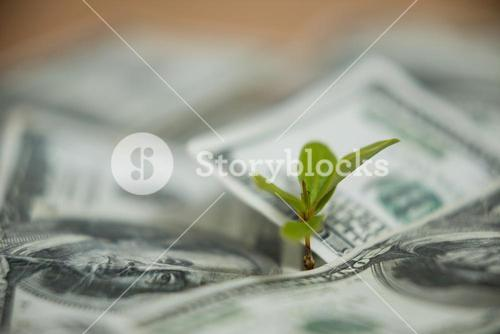 Small plant growing on currency note