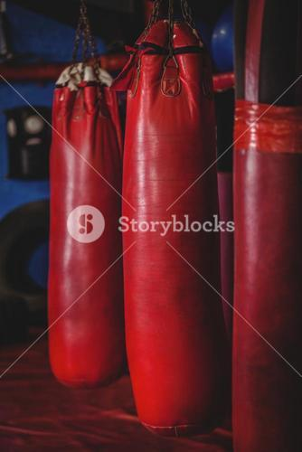 Punching bags hanging