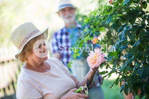 Senior woman cutting flower with pruning shears