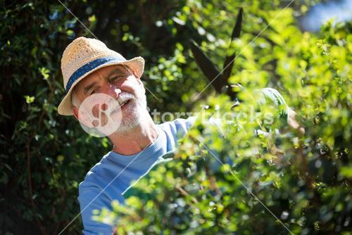 Senior man trimming plants with pruning shears