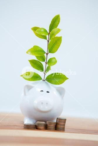 Green plant growing from a piggy bank