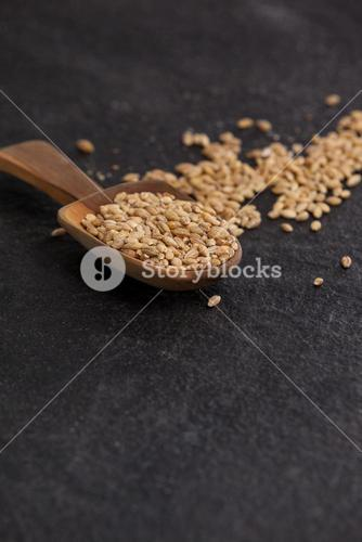Scoop of wheat grains