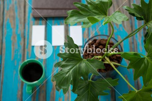 Coffee and pot plant on wooden table
