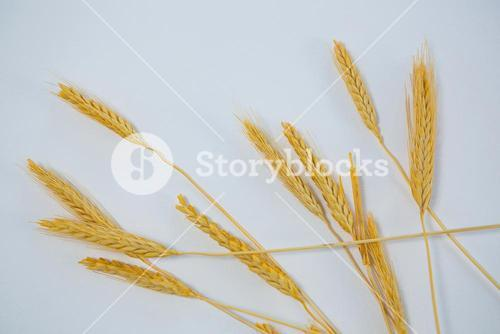 Close-up of wheat grains