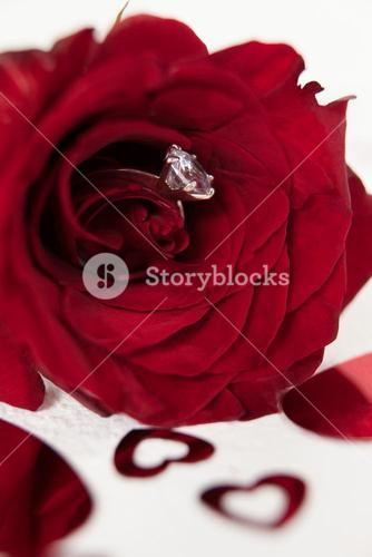 Red rose with a diamond ring