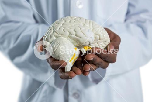 Doctor holding anatomy brain