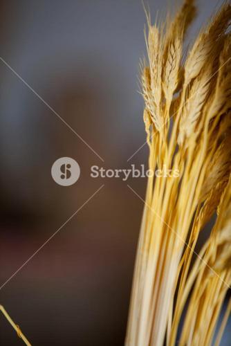 Ears of wheat in bakery shop at market