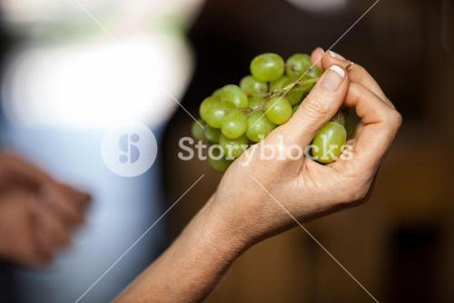 Woman hand holding grapes