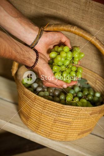 Hand of male staff grapes in organic section