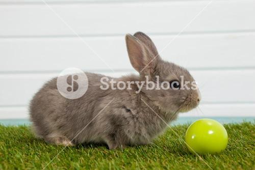 Green Easter egg and Easter bunny sitting on grass