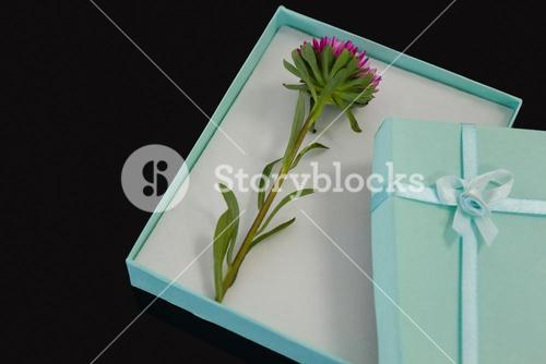 Opened gift box with a flower