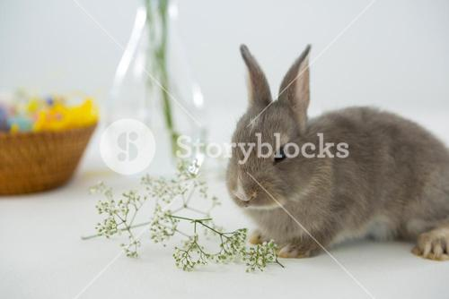 Easter bunny with flower on white background