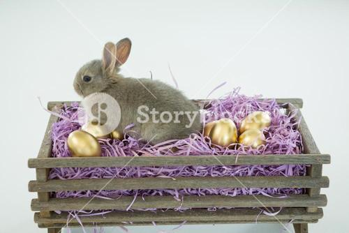 Golden Easter eggs with Easter bunny in crate