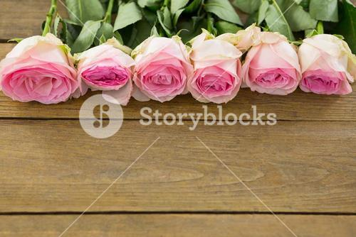 Pink roses arranged on wooden plank