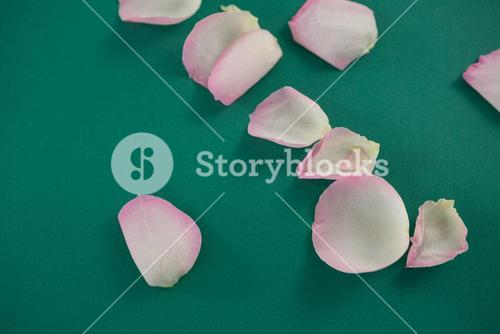 Rose petals on green background