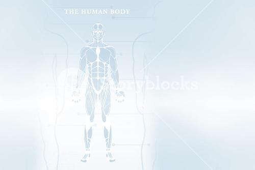 Human body over white background