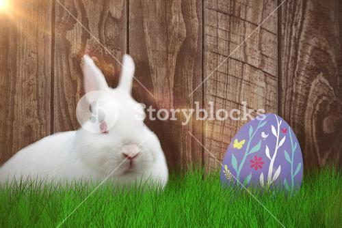 Composite image of rabbit over white background