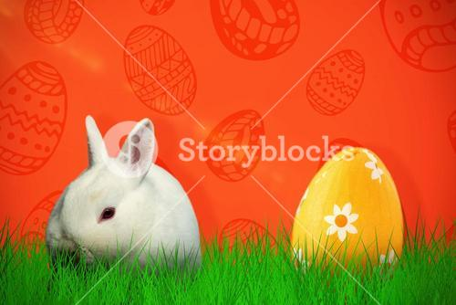 Composite image of rabbit against white background