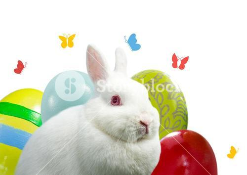 Rabbit with eggs and butterfly. Happy Easter.