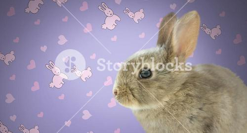Easter Rabbit against wall with rabbit pattern