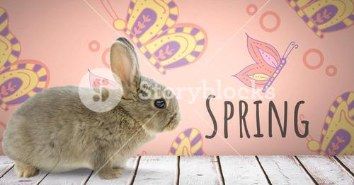 Spring text with Easter rabbit in front of pattern