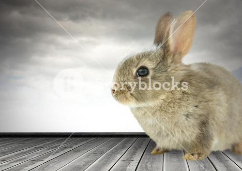 Rabbit in front of cloudy sky