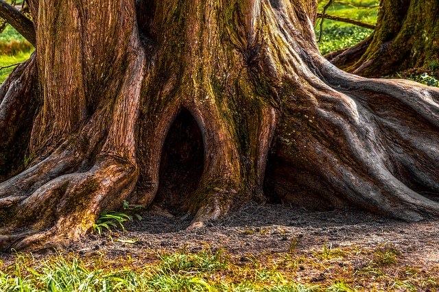 mijn boomlange vader