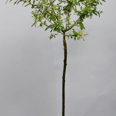 Tall plant