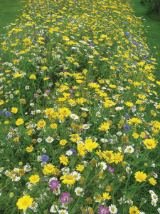 Wildflower-garden-at-Bowbrook-Allotment-Community
