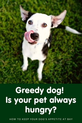 How to deal with a greedy dog