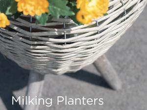 Planters & Pots - June 2018