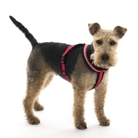 Company of Animals Comfy Harness Size 7/XL (Chest 74-100cm) Red