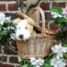 Eliot Dog in a basket