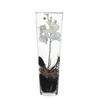 Phalaenopsis White in Vase