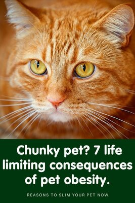 7 life limiting consequences of obesity in cats and dogs