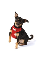 Doodlebone Mesh Harness X-Small - Red x 1