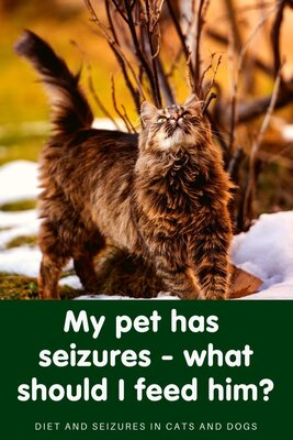 What should I feed a cat or dog with seizures?