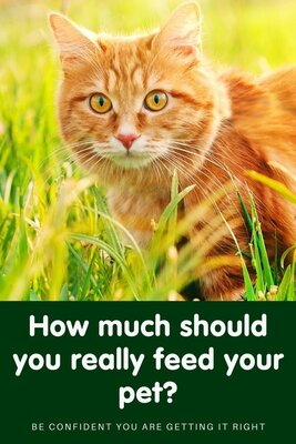 How much should you really feed your pet?