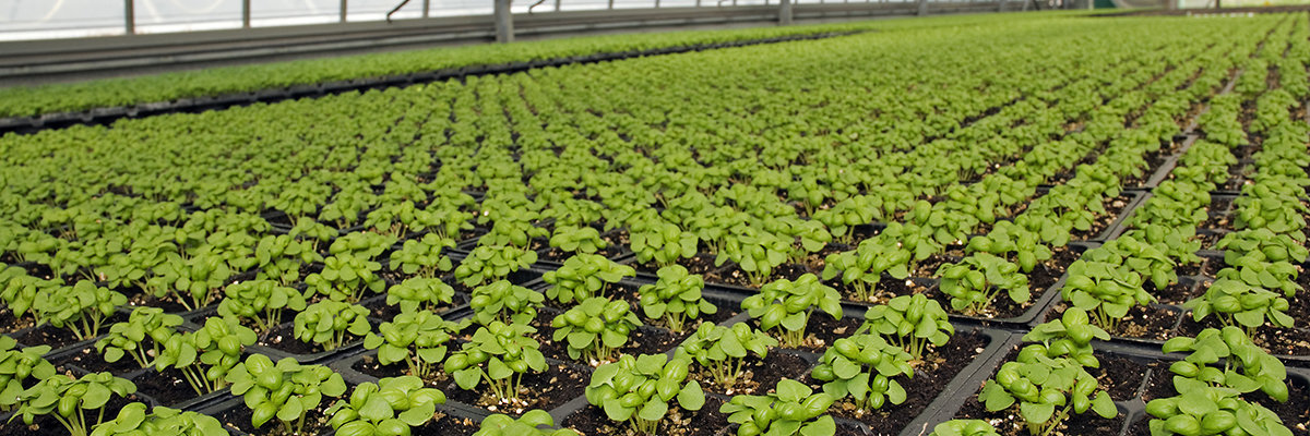 Expert advice and an exclusive range of bio pesticide products for your commercial growing business