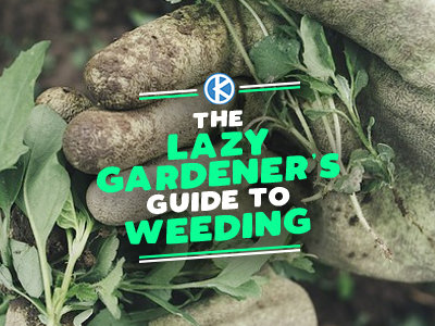 A Lazy Gardener's Guide to Weeding