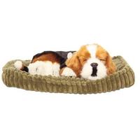 Bertie The Beagle