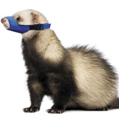 Quick Muzzle Ferret