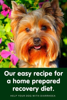 Easy recipe for a home made recovery diet for dogs