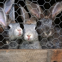 600mm Wire Rabbit Netting 0.9mm 50m