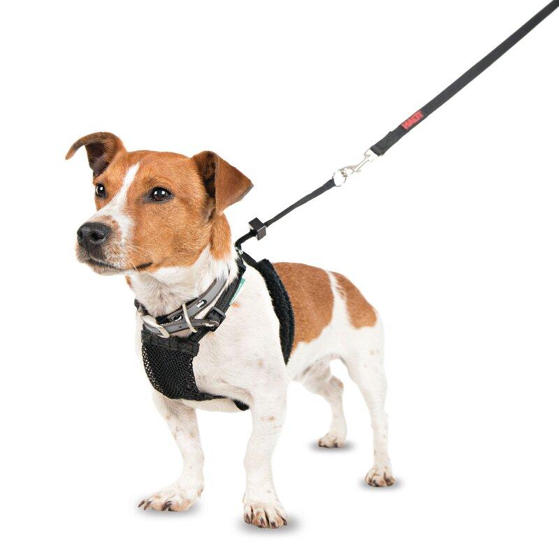 Company of Animals Non-Pull Harness Black - Small