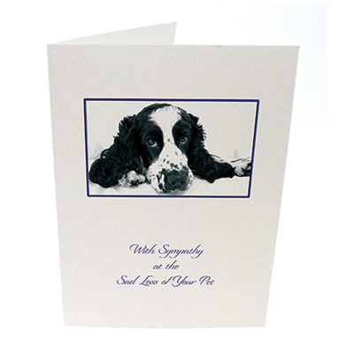 Purfect Sympathy Cards 5pk - Style  6