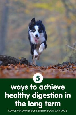 5 ways to help your pet achieve long-term digestive health