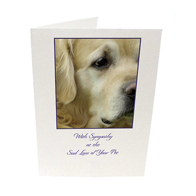 Purfect Sympathy Cards 5pk - Style  3